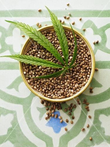 Hemp seeds and a hemp leaf