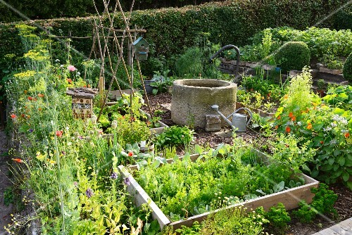 A vegetable garden with a well