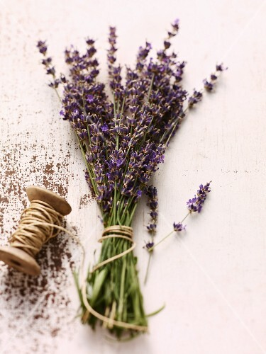 Lavender flowers tied with twine