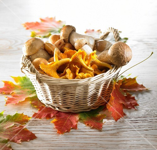 Ceps and chanterelles