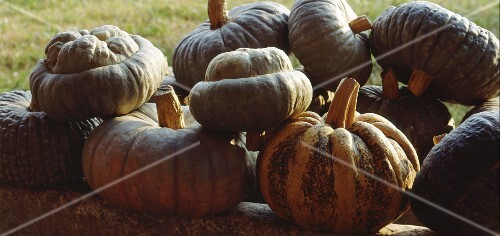 A selection of squash from Mantua