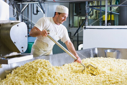 Cheese maker raking grated farmhouse cheddar