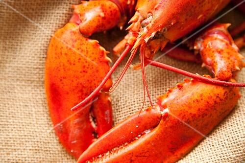 Boiled Lobster on a Burlap Sack