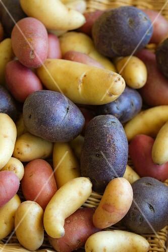Peruvian Purple Potatoes with Fingerling Potatoes