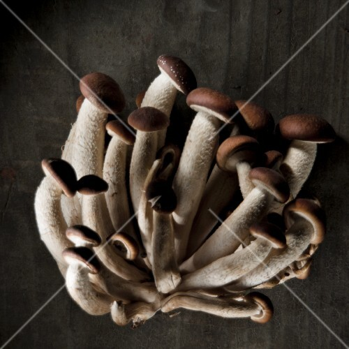 Beech mushrooms against a black background