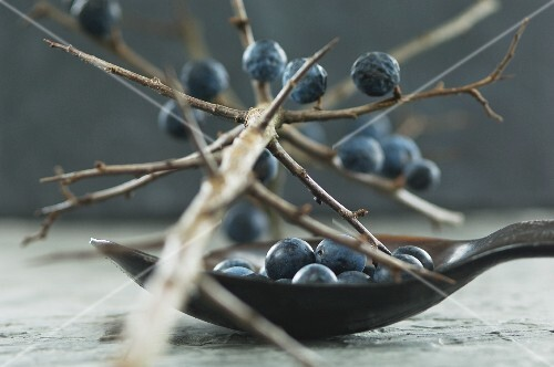 Sloes on a branch and in a spoon