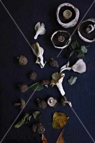 Assorted mushrooms and autumn leaves