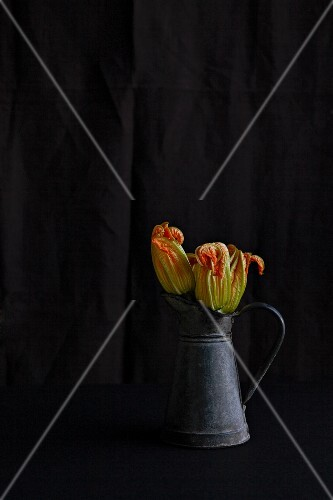 Two courgette flowers in a zinc jug