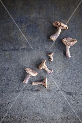 Fresh mushrooms on a grey-blue surface