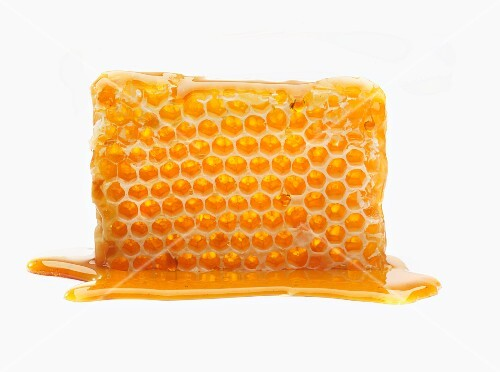 A honeycomb in a pool of honey