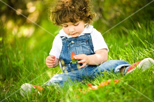 A small boy sitting in a field eating strawberries
