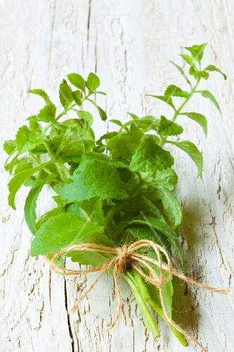 A bunch of sweet leaf (stevia)