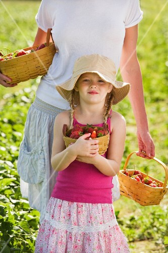 Mother and daughter picking fresh strawberries
