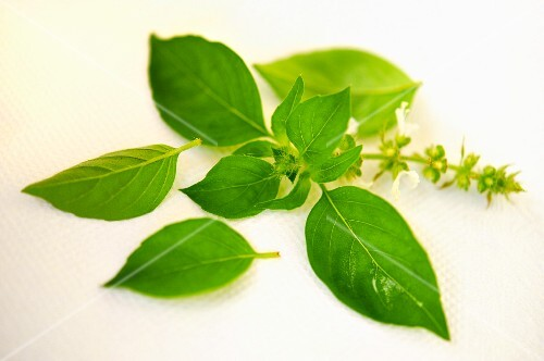 Fresh basil with flowers