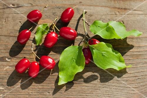 Cornelian cherries in the sunshine