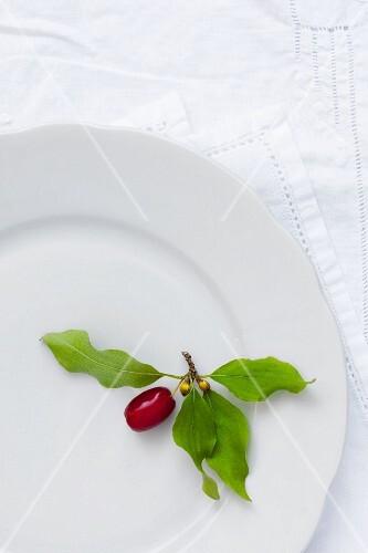 One cornelian cherry