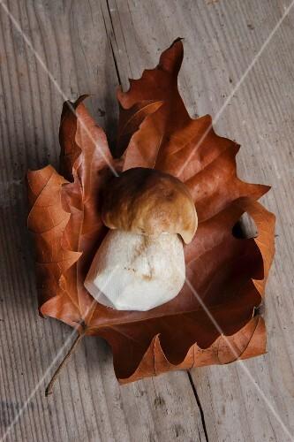 Fresh porcini mushroom on a dried autumn leaf