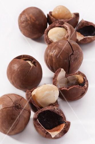 Several macadamia nuts