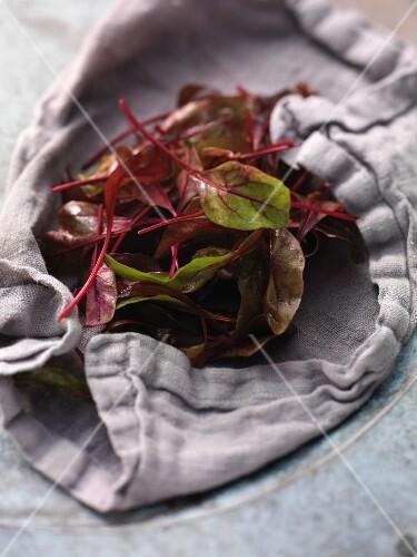Fresh beetroot leaves on a tea-towel