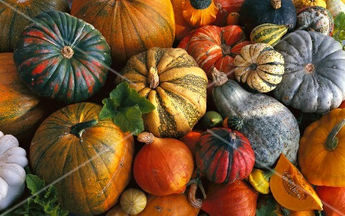 Assorted types of squash (filling the image)