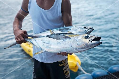 A man holding two freshly caught bigeye tuna