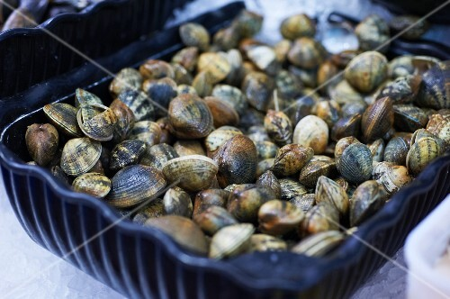 Lots of fresh clams in a container