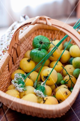 A Basket of Green and Yellow Tomatoes
