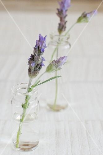 Lavender flowers in vases