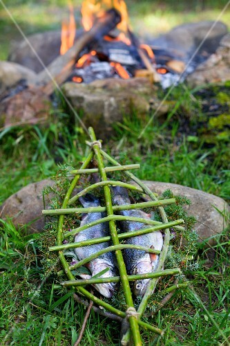 A pair of trout in a home-made willow fish basket