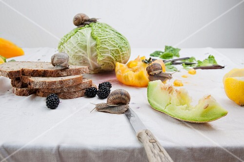 A still life featuring vegetables, fruit and bread, with snails moving freely over the different elements