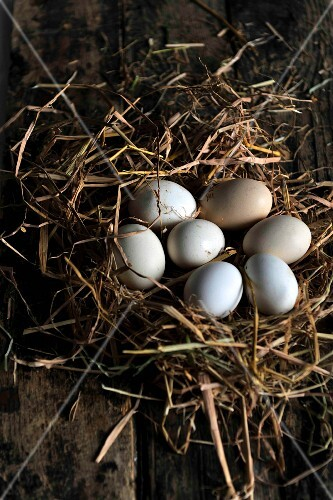 Eggs in a nest of hay