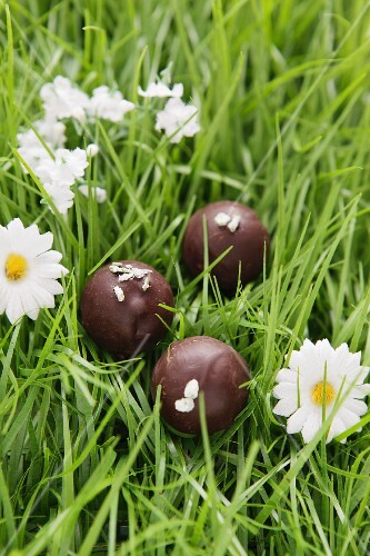 Chocolates with candied rosemary in artificial grass