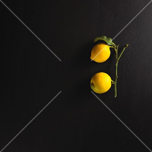 Two lemons on a stem with a leaf
