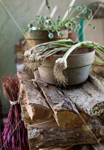 Green Onions Over a Clay Bowl on a Woodpile