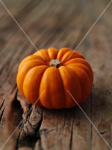 Munchkin Pumpkin
