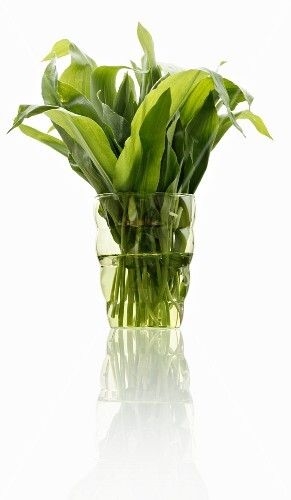 Fresh wild garlic leaves in a glass of water