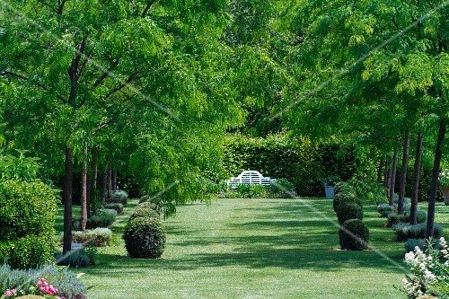 A well-tended garden with box balls, rows of trees and a bench