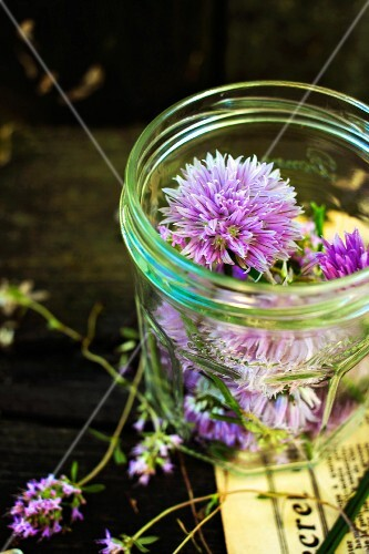 Chive flowers in a screw-top jar