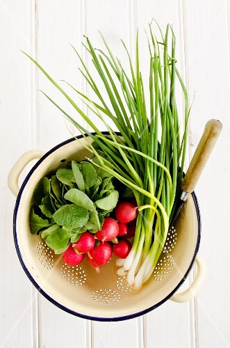 Radishes and spring onions in an enamel colander against a white background