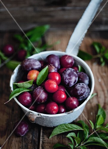Plum varieties in a saucepan