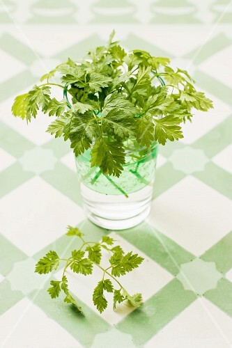 Fresh chervil in a glass of water