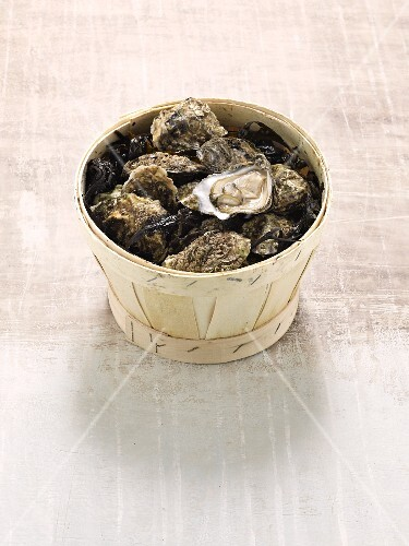 Pacific oysters of the variety Kelly Gigas in a woodchip basket