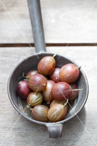 Gooseberries in an old sieve