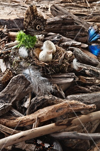 Butterflies and a bird's nest with eggs amongst the branches and bits of wood