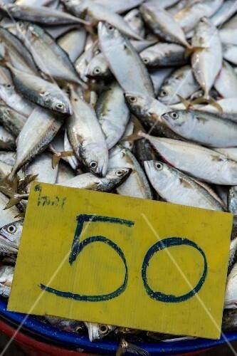 Fresh mackerel at a market in Mahachai, Thailand