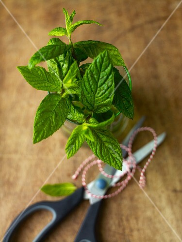 Sprigs of mint