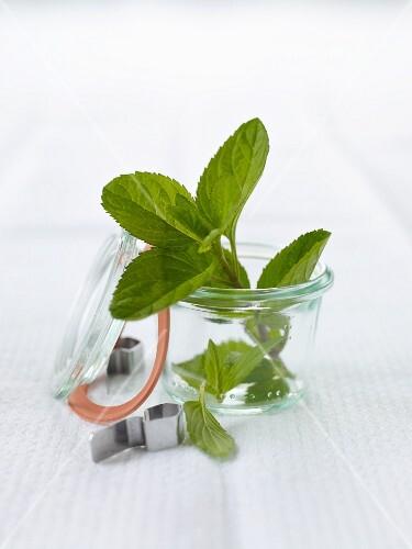 A sprig of fresh mint in a storage jar