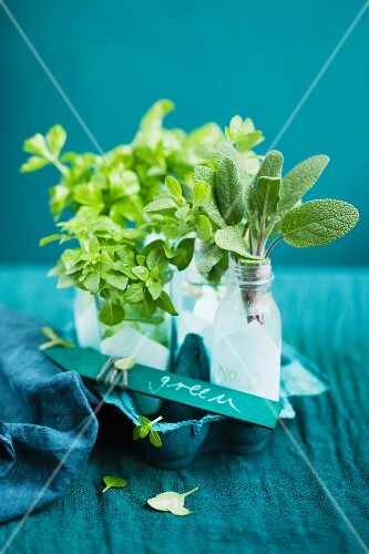 Fresh herbs in bottles