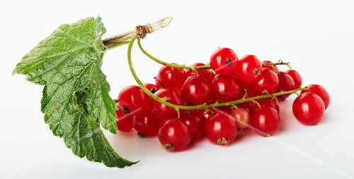 Redcurrants on the stalk, with leaf