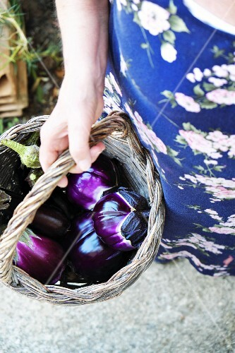 A hand holding a basket of freshly harvested aubergines